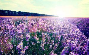 flores-706x432